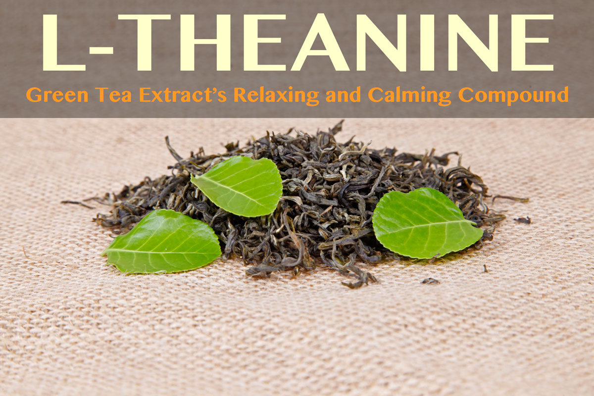 l-theanine benefits leafs dry and fresh